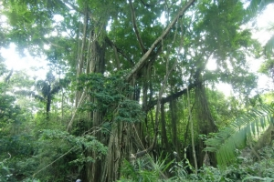 Bali monkey forest jungle