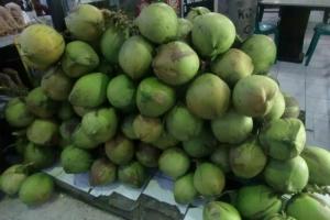 Bali green Coconuts