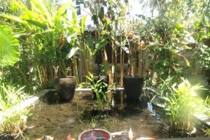 Bali koy pond