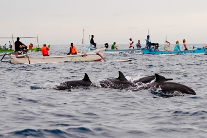 Dolphin Sunrise Trip Bali